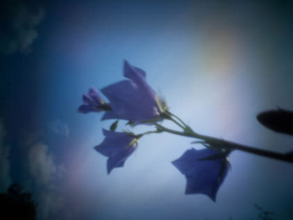 flowers with pinwide