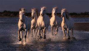 Wild Horses Running Through The Sea Awarded POTW Accolade