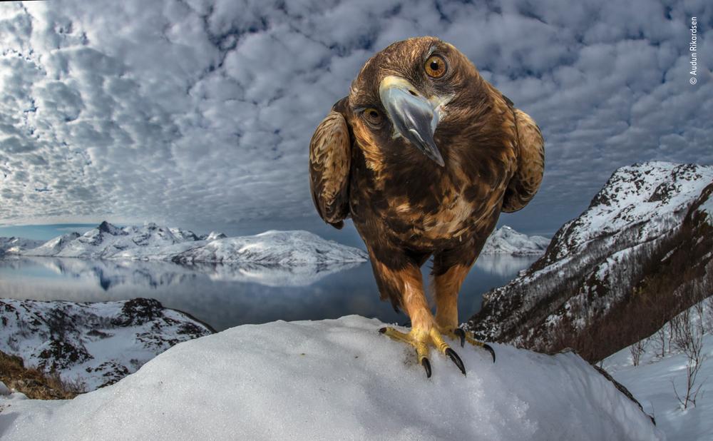 Inquisitive by Audan Rikardsen, Norway