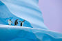 Thumbnail : Win An Antarctica Photography Safari