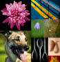 Thumbnail : What To Photograph Close To Home
