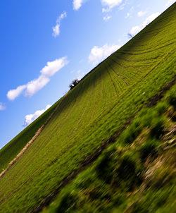 Photo by Jon Mcgovern colourful field