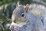 cyrilsquirrel