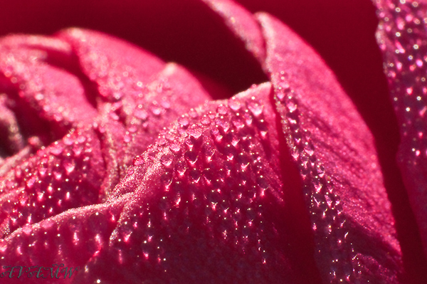 4314-pink-flower-resized--35.jpg