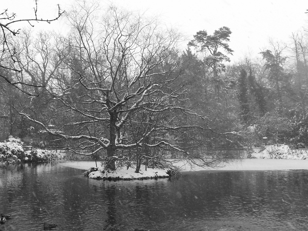 winter-pond--.jpg