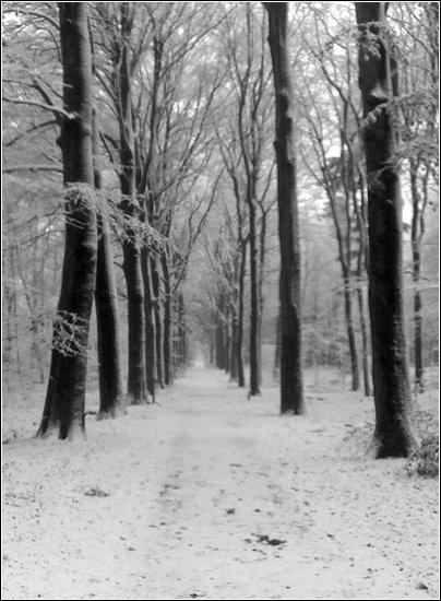 1-e71-snow-17122010008-blog-u.jpg