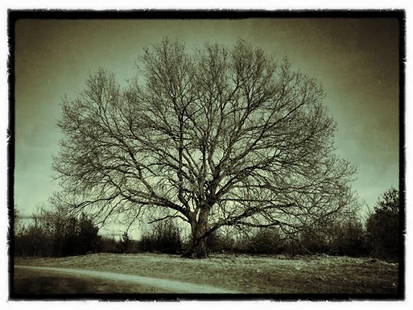 nostalgictree-0217-up.jpg