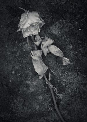 flower2-blog.jpg