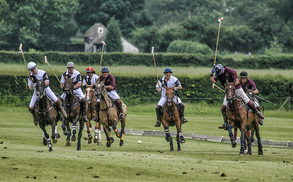 knepp-polo-res.jpg
