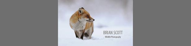 Brian_Scott