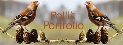 pollisher