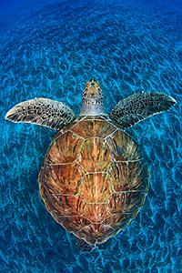 2012 Veolia Environnement Wildlife Photographer of the Year