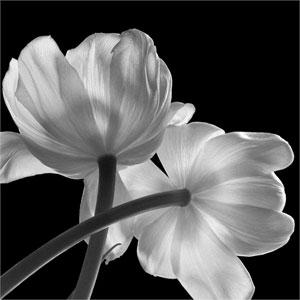 FLOWERS by Hiroyuki Arakawa and Lisa Creagh