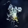 Stilllight - an exhibition by Jake Curtis