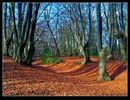 Loughton Camp in the Autumn