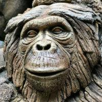 monkey1973