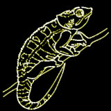 micra-chameleon