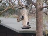 Mr_Squirrel