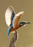 BirdmanDon
