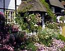 Cottage Garden in Summer, Hampshire, UKThis image was taken early morning in mid summer using a Pentax 67, 50-100mm lens, monopod, 81b filter, polariser and Kodak E100vs film.Slow film is essential in order to capture the fine detail and the polariser enh