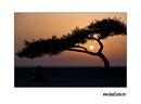 Croatian bonsai :)