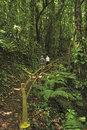 Forest in La Palma island