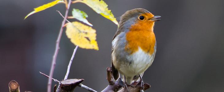 Winter Bird Photography Tips