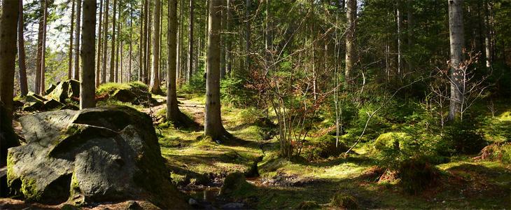 4 key ingredients for better landscapes
