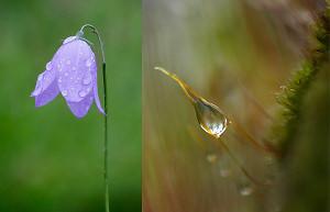 5 Top Garden Macro Photography Tips - How To Photograph Dew Drops