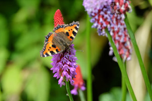 What To Photograph Around The Hedgerows Of The UK