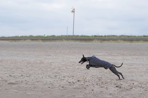 4 Top Tips On Photographing Dogs At The Beach