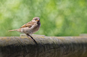 10 Quick Tips On Photographing Garden Birds