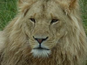 5 Common Wildlife Photography Mistakes To Avoid