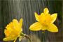 10 rainy day photography tips