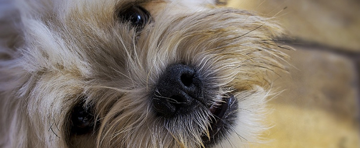 11 Top Pet Photography Tips For Beginners