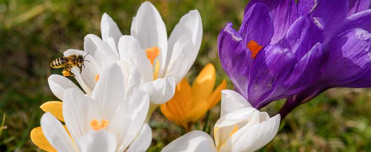 spring photo ideas