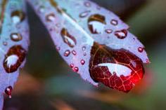 Affinity Photo 'Autumn' Competition Winner Revealed