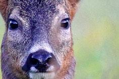 Panasonic 'Nature' Competition Winner Announced