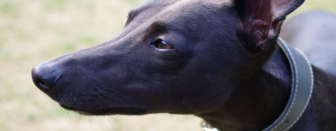 Perfect Your Pet Photography With These 6 Top Tips