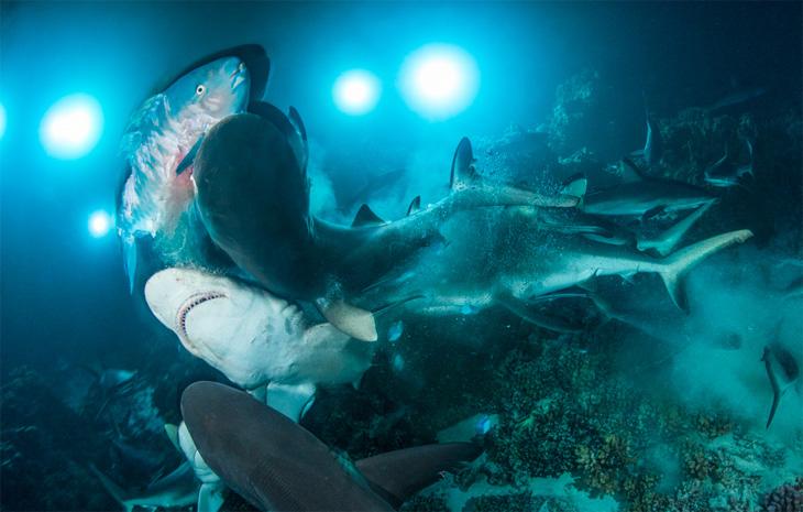 Underwater photographer of the year 2019