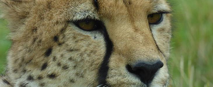 Photography In UK Wildlife Safari Parks