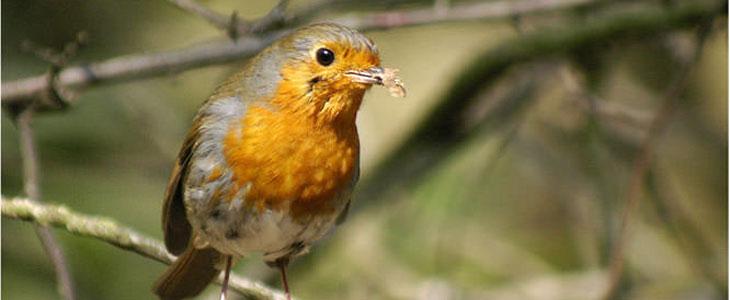 Basic wildlife photography tips