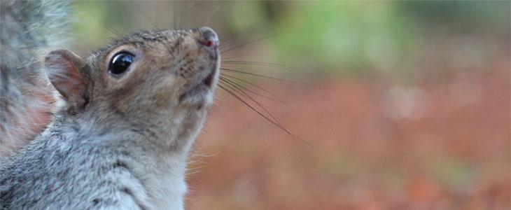 winter wildlife photography tips