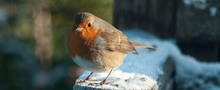 Epic List Of 30 Winter Photography Tutorials