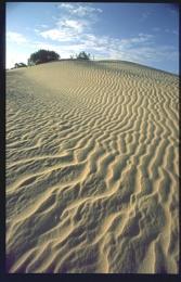 PINNACLES DESERT - W. AUSTRALIA