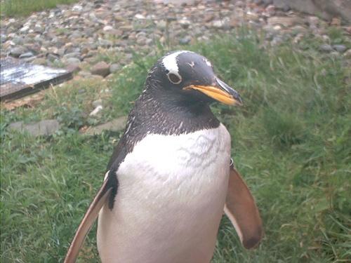 Penguin Enclosure @ Edinburgh Zoo by tamodels
