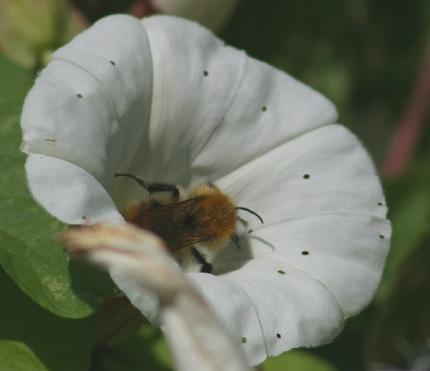 Bee in Flower by Linda