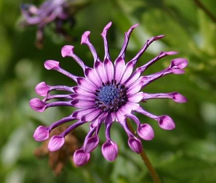 Flower Wheel by Linda