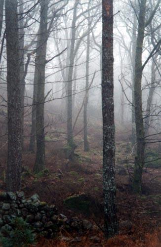 Misty Woodland by heidi
