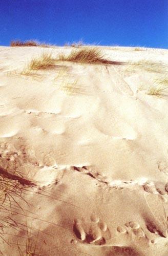 Sand Dune by heidi
